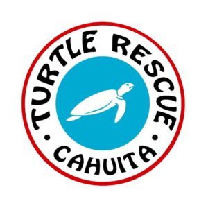 Turtle Rescue Cahuita